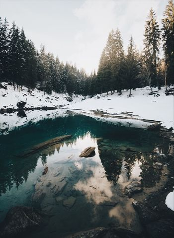 Caumasee Winter Cold Temperature Nature Snow Tree Beauty In Nature Tranquil Scene Scenics Frozen Water Wilderness Tranquility No People Ice Sky Outdoors Landscape Frozen Lake Day