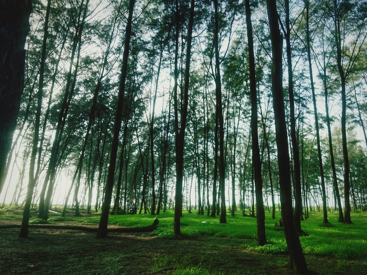 Tree Trunk Forest Tranquility Tree Tranquil Scene | EyeEm