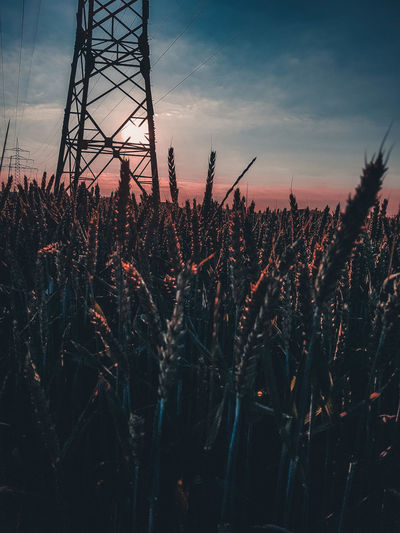Field Sunset Filter Red Blue Field Sunlight Tree Sunset Agriculture Silhouette Rural Scene Winter Sky Landscape Electricity Tower Power Line  Pollen