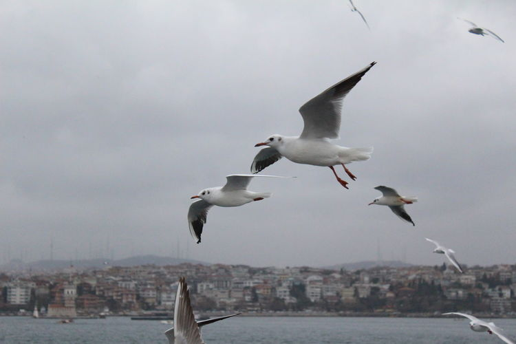 Seagull flying over city