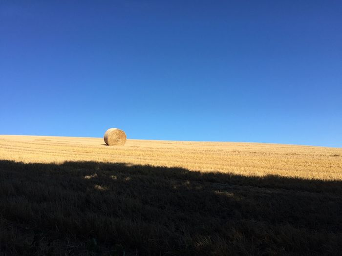 Bale of Hay in Field in front of Blue Sky Aberdeenshire Agriculture Clear Sky Farm Field Forvie Hay Field Pasture Bale  Bale Of Hay Blue Sky Country Life Countryside Day Hay Horizon Landscape Nature Outdoors Prairie Rural Scene Scenics Sky Straw Tracks In Snow