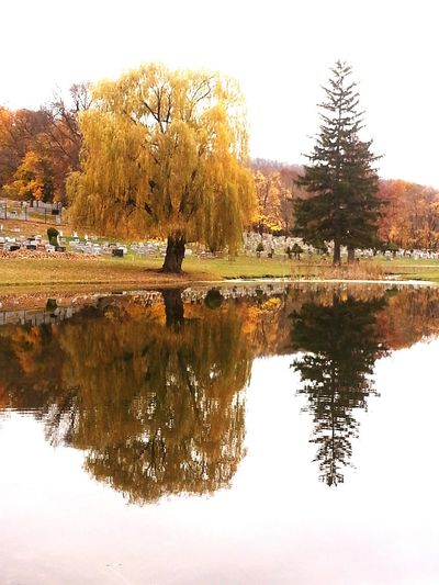 One of my favorite pictures, Taken mid-October of this past fall ('14) Water Reflections Beautiful Reflection Tree Porn Beautiful Shot Awesome_nature_shots Awesome Moments Hugging A Tree Trees Tree Love