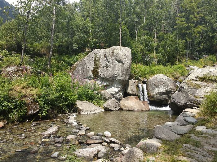 Tree Rock -