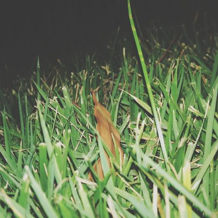 Grass Green Color Nature No People Plant Leaf