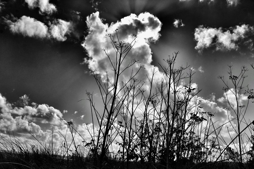 Nature Plant Growth No People Outdoors Day Beauty In Nature Sky Flower Tree Close-up Freshness Beach Nature Beach Photography Blackandwhite Photography Blackandwhite Par Cornwall Par Sands Beach Noir Sand Dunes