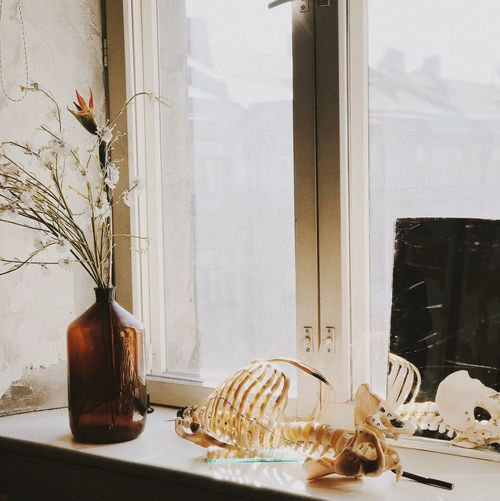 VESNA Vscocam EyeEm Mobilephotography IPhoneography Window Indoors  No People Day Close-up Nature The Still Life Photographer - 2018 EyeEm Awards