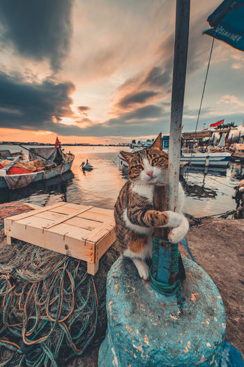 High angle view of cat sitting by sea against sky during sunset