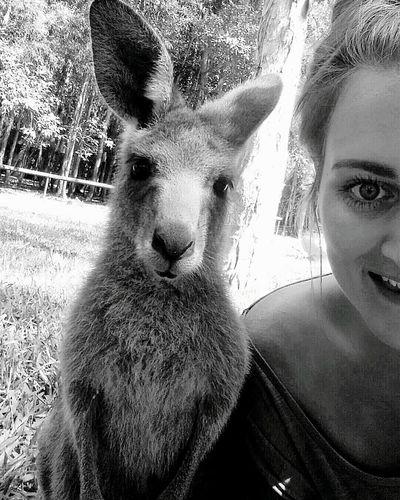Australia Eastcoast KangarooJack