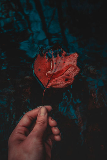 Human Hand Red Human Body Part One Person Close-up Day EyeEm Eye4photography  Outdoors Pretty New Leaf Macro Autumn Nature_collection Happy Nature EyeEm Nature Lover Growth Full Frame Water Colorful Color Macro_collection Exploring The Great Outdoors - 2017 EyeEm Awards