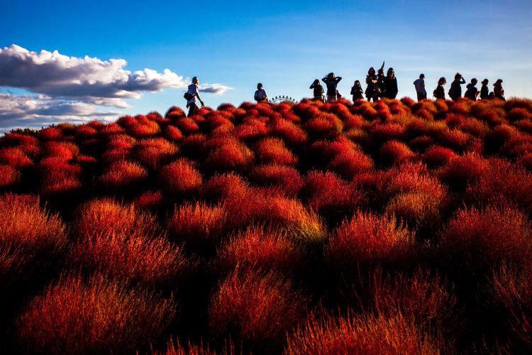 Autumn Hitachi