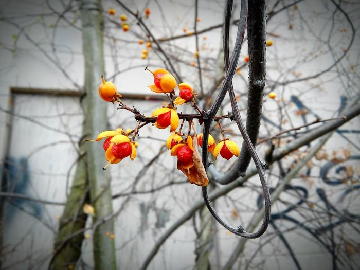 Selective Focus Natural Beauty Urban Backdrop Pods Wild Berries Hidden Within Beauty In Ordinary Things Finding Treasure