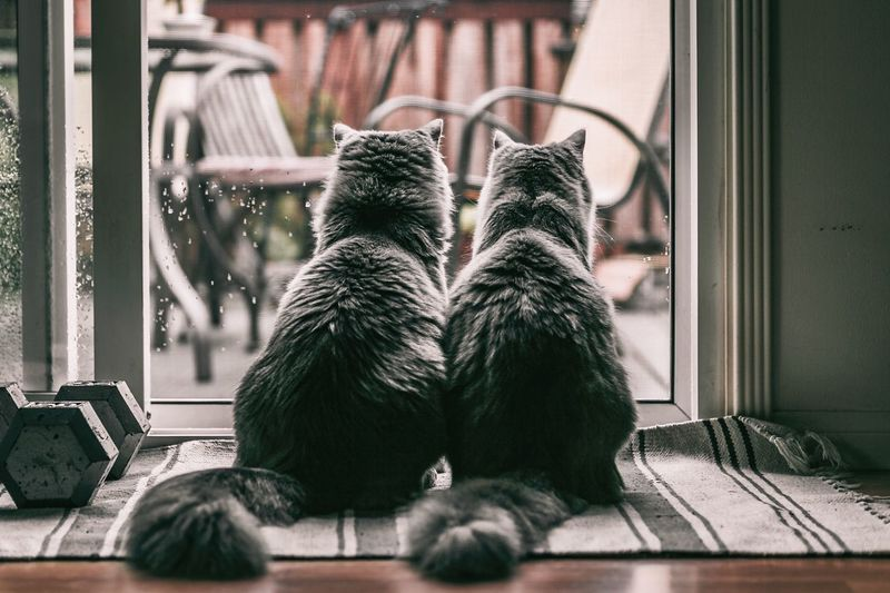 Rear View Of Cats Sitting On Mat By Glass Window