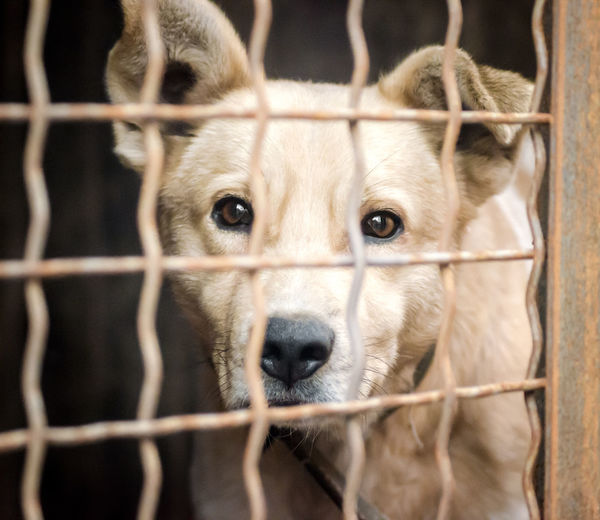 Portrait of dog in cage