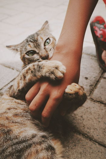 Need a big huge Pet Portraits Pets Limb Low Section Holding Domestic Animals Friendship Close-up Outdoors One Animal Human Hand Full Length Animal Themes Fine Art Photography EyeEmNewHere The Week On EyeEm Photography Themes