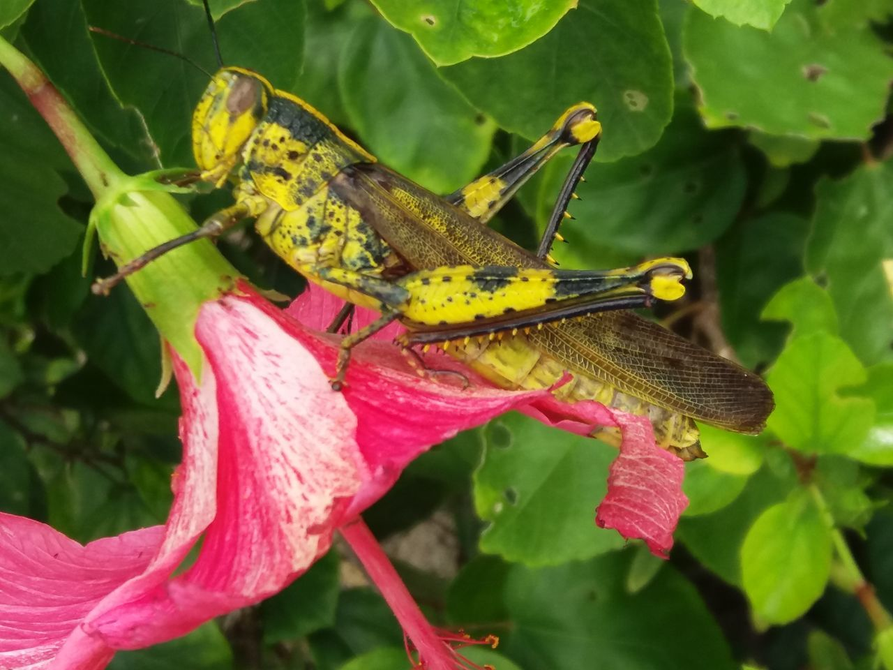 animal themes, animal, animals in the wild, animal wildlife, one animal, invertebrate, insect, plant, plant part, leaf, close-up, nature, green color, growth, no people, beauty in nature, flower, day, pink color, flowering plant, outdoors, flower head