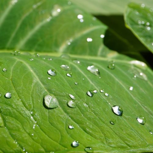 Drop Water Leaf Green Color Wet Nature Close-up No People Fragility Freshness Growth RainDrop Selective Focus Beauty In Nature Full Frame Day Outdoors Purity Backgrounds