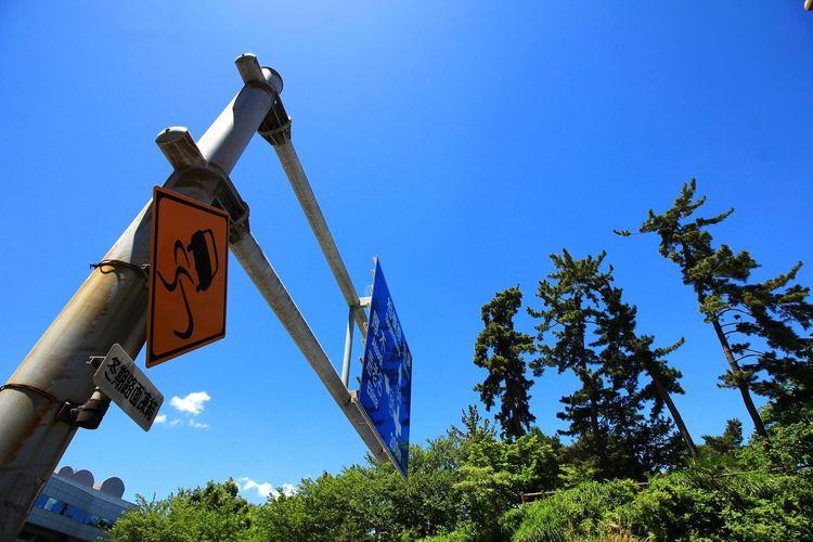 Tree Clear Sky Blue Sky Signboard