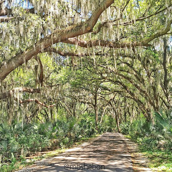 Landscape_Collection Eye4photography  Florida EyeEm Nature Lover Nature Finding Beauty Oak Trees Spanish Moss Nature_collection Southern Life