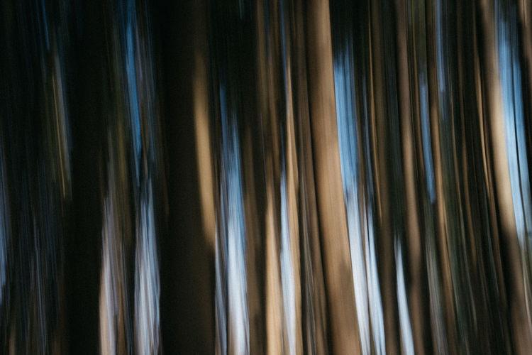 Full frame shot of palm trees