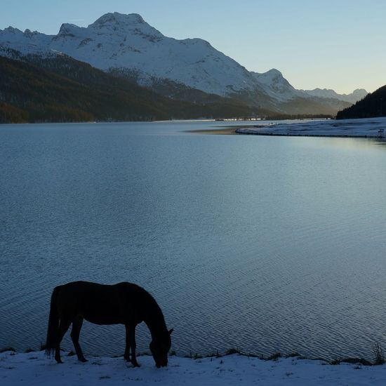 What remains of the day Engadin Corvatsch Horses Lake LakeSilvaplana Margna SilsMaria Mountain Range Swiss Alps PreciousMoments Switzerland Tranquility Shades Of Winter