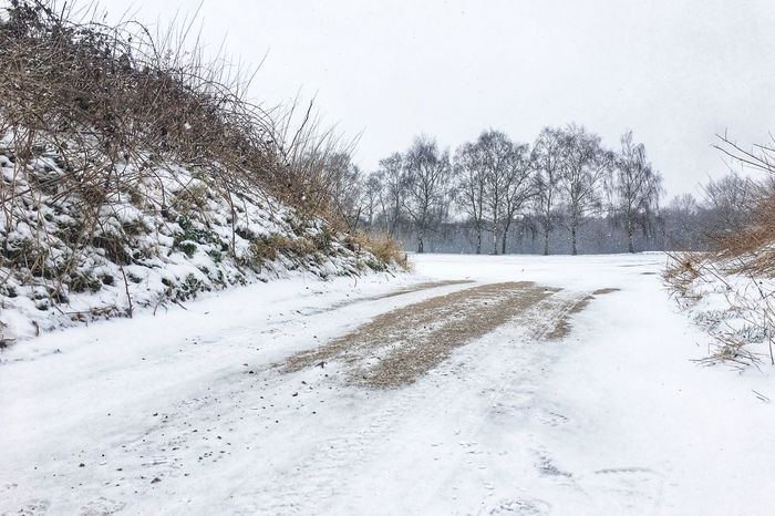 Winter scene No People Snowy Path Snow Winter Cold Temperature Nature White Color Weather Beauty In Nature