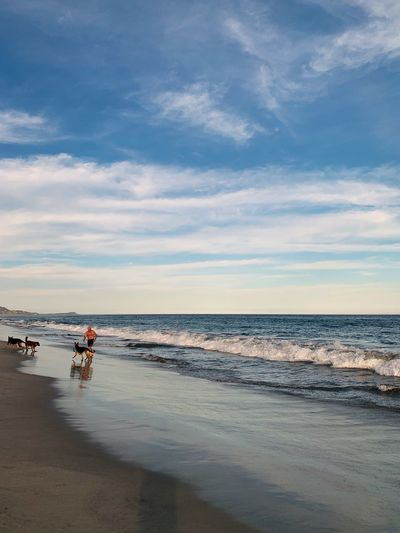 Man playing with dogs on the beach Postcard Picture Dogs Water Sea Sky Land Beach Cloud - Sky Beauty In Nature Sand Horizon Over Water