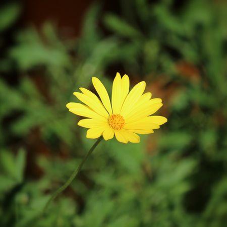 花 Nature Flower Nature_collection EyeEm Nature Lover 花と庭