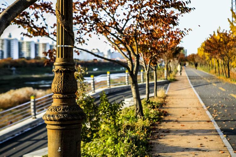 Walkway Amidst Trees At Park