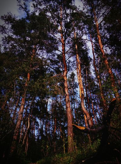 Tree Growth Nature Forest Beauty In Nature No People Outdoors First Eyeem Photo