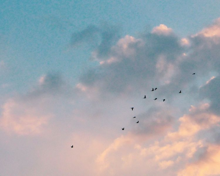 Rise And Shine Flying Sky Low Angle View Bird Animal Themes Cloud - Sky Nature Parrots Flock Of Birds Flying High Beauty In Nature Large Group Of Animals Migrating Day Iphonephotography VSCO Cam The Week On EyeEem Eyeem Market EyeEm Gallery EyeEm Best Shots