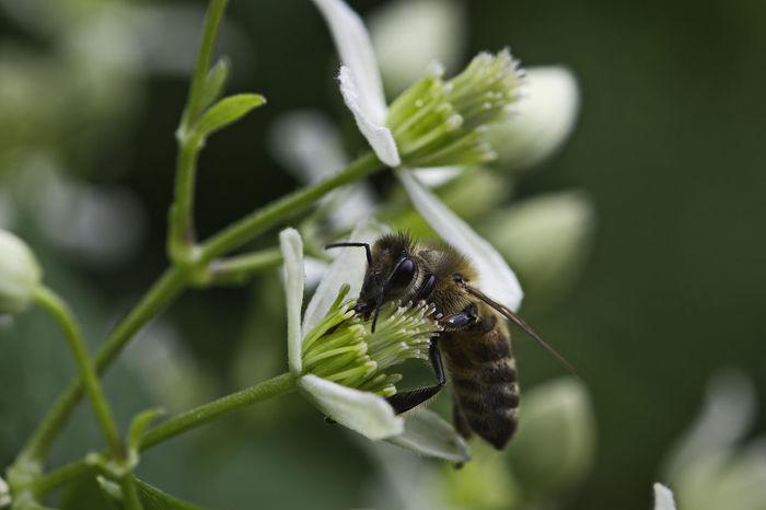 #brooklynbotanicgarden Nature Beauty In Nature Close-up D5500 Flower Garden Insect Macro