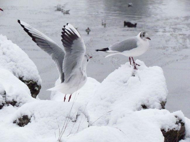 Gulls Winter EyeEm Selects Nature Gulls In Flight Gulls On Rocks Gulls Chillin