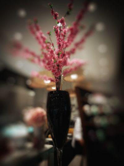 Sakura Flower Nature Plant Fragility Blur Infinixhotpro Infinixphotography Infinix