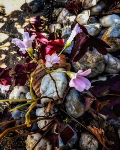 light and shadows Joy Of Life Flower Head Flower Leaf Petal Close-up Plant Life Botany