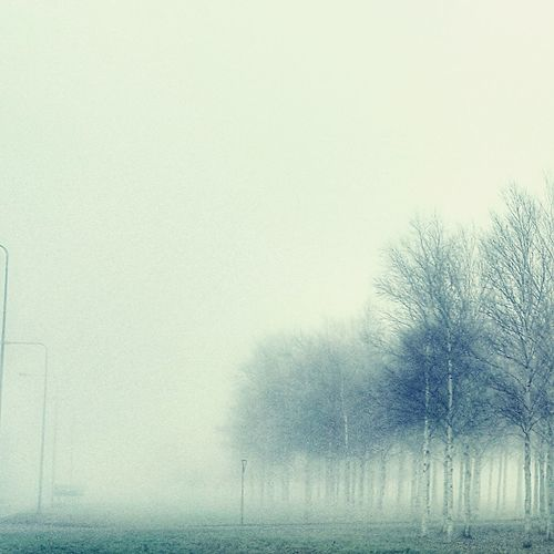 Trees in snow against sky