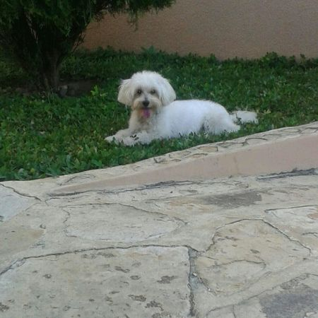 Cute Dog  Pelusa♡♡♡♡