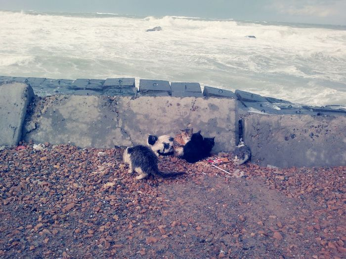 Winter Cats 🐱 Cat♡ Cats Of EyeEm Catslife Cats And Winter Cats In Storm Cats!!! Winter Time Winter Sea Stormy Weather Angry Sea Outdoors Nature_collection By Myself Taken By Me