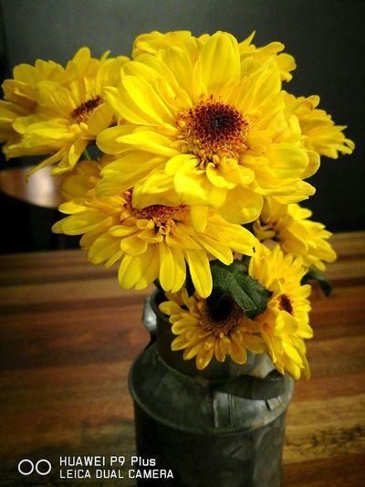 Yellow Flower Freshness Close-up Huaweiphotography Leicadualcamera Huawei P9 Plus Oopsygram