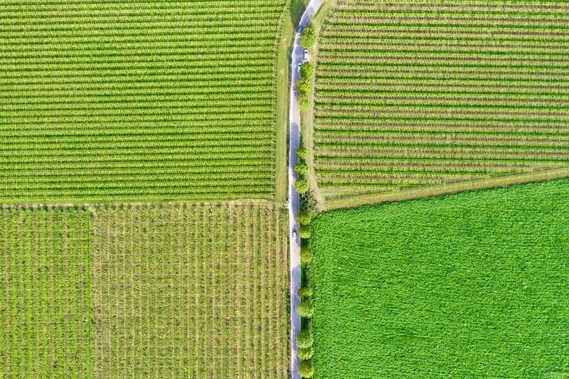 Italy, Verona: Valpolicella wineyards Drone  Green Color Agriculture Plant Land Nature No People Growth Field Wineyard Valpolicella Drone Photography From Above  High Angle View Looking Down Pattern Textured  Full Frame Crop  Backgrounds Parallel Lines Lines Landscape Springtime Day Daylight Daytime Geometry Horizontal Italy Verona Repetition Nature Outdoors Nobody Viniculture Environment Shades Of Green  In A Row Side By Side Order Abundance Rural Scene Aerial View Column Road Country Road Curve Transportation Farm Scenics - Nature Tranquil Scene Beauty In Nature