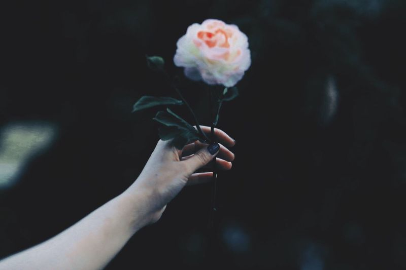 | flower | Flower Human Hand Holding One Woman Only One Person Indoors  Human Body Part People Only Women Canonphotography Canon Canon6d