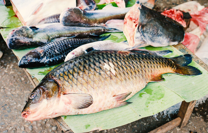 fish in the market from laos Animal Animal Themes Catch Of Fish Close-up Day Fish Fishing Industry Food Freshness Group Of Animals Large Group Of Objects No People Retail  Seafood Vertebrate