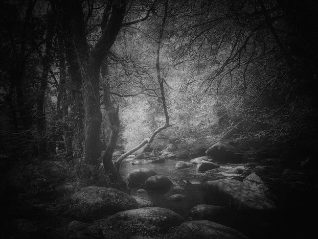 Forest Nature Tree Tranquil Scene Beauty In Nature No People Outdoors Blackandwhite Exploring IPhone Photography Tadaa Community Fortheloveofblackandwhite