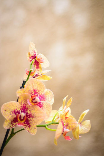 Close-Up Of Orchids Growing Outdoors