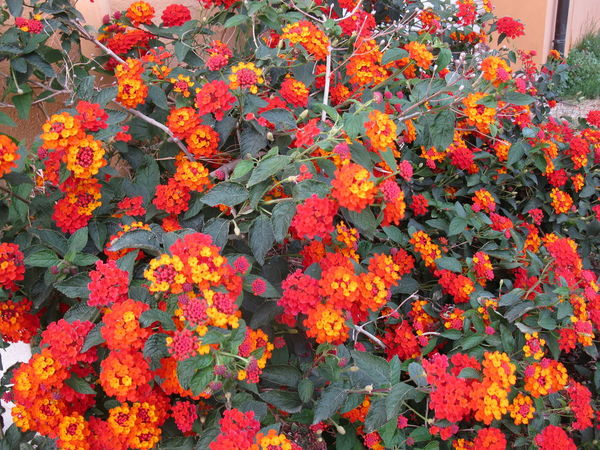 Fiori Beauty In Nature Blooming Close-up Day Flower Flower Head Fragility Freshness Growth Leaf Nature No People Orange Color Outdoors Petal Plant