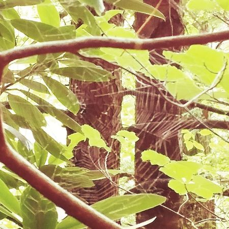 Spider web in the trees... Spider Web Close-up Leaf Beauty In Nature