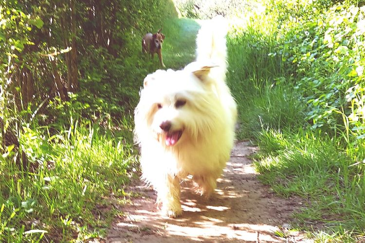 Happy Face Kaiko enyoing the walk in Maastricht Samsung Galaxy S5 The Joy Of Animals Animalphotography Taking Photos Dogslife Animal Themes Animal Love Dog Photography Dogstagram Dog Days Animals Kaiko & SemDogoftheday Samsungphotography Animal Photography Catch The Moment