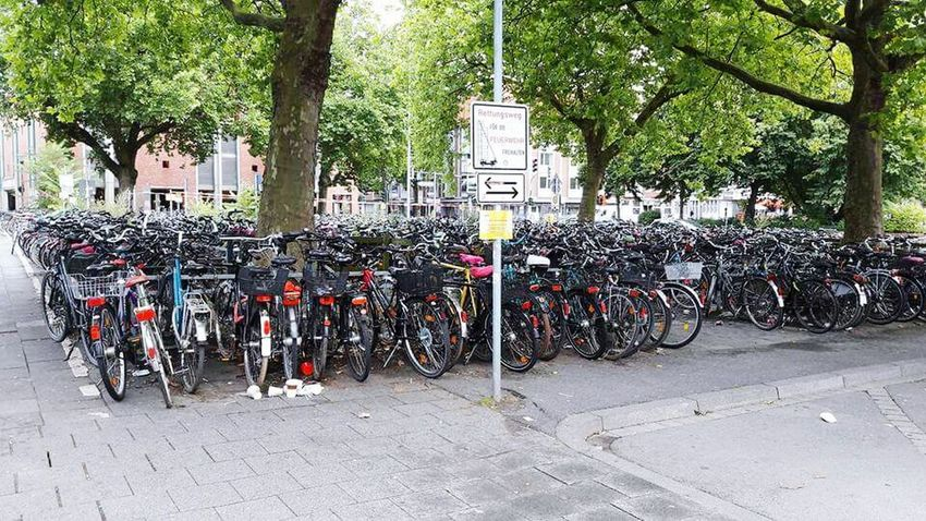 Münster, Germany Bicycle Tree Outdoors Transportation Bicycle Rack Day Stationary No People City Architecture