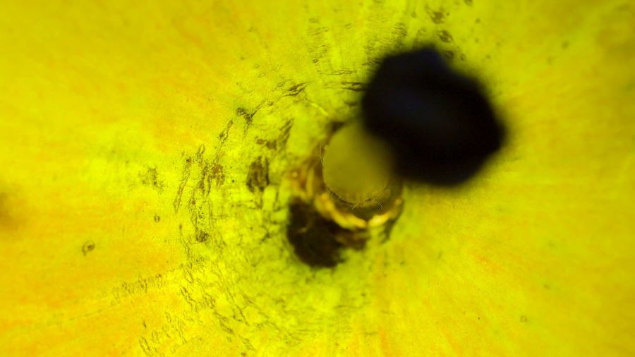 Macro shot of insect on yellow flower