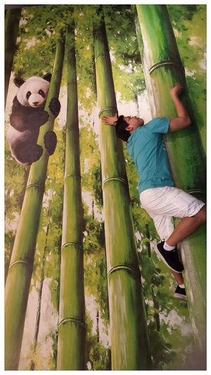 """the hunter meets the panda...."" Panda Green Color Bamboo Grove Nature Pandashots PANDA ♡♡ Bamboo - Plant 3D Drawing 3Dpainting Animal Wildlife & Nature Illusion Photography Me Adapted to the City Perspectives On Nature Visual Creativity"