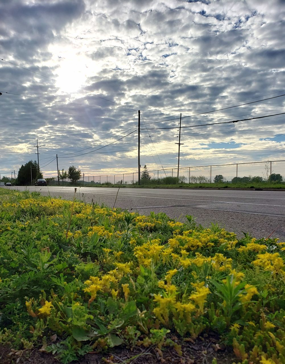 sky, cloud - sky, plant, nature, no people, growth, yellow, beauty in nature, field, flower, land, flowering plant, electricity pylon, electricity, day, landscape, fuel and power generation, agriculture, environment, tranquility, outdoors, power supply